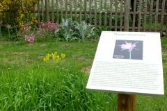 jardin botanique affiche2