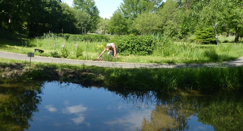 jardin-botanique-pièce-d'eau-du-jardin