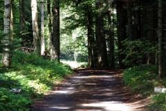 randotourisme-fôret-du-Lizieux-chemin-